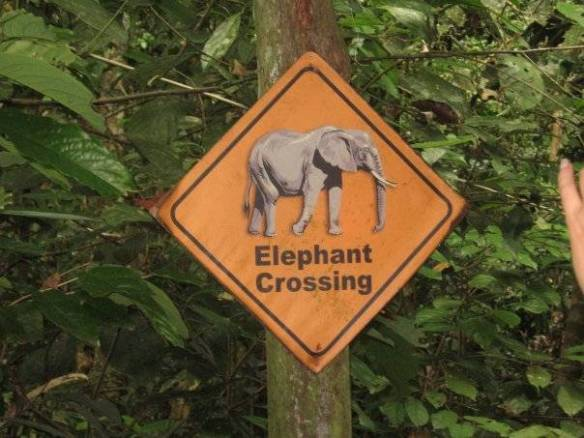 elephant crossing sign, malaysia